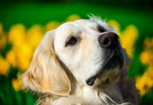 Cani con pelo lungo: utili consigli per la toelettatura