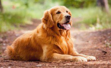 Cani da compagnia: ecco le 10 razze canine più adatte per i bambini