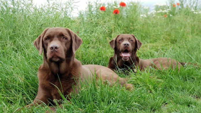 Pulci nel cane: i metodi per eliminarle